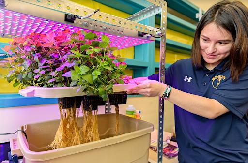 Un estudiante de secundaria tiende un sistema de cultivo hidropónico.
