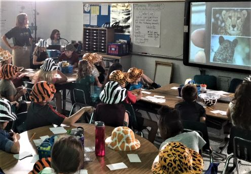 students in a classroom participate in a livestream of a wildlife safari